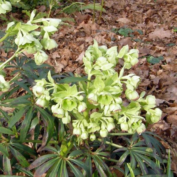 Stinky Plants rottenbotany