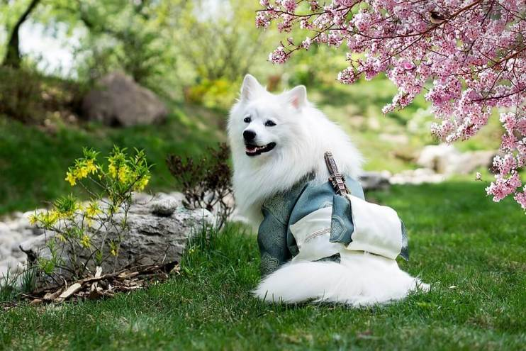 A Complete Guide to 10 Best Asian Dog Breeds