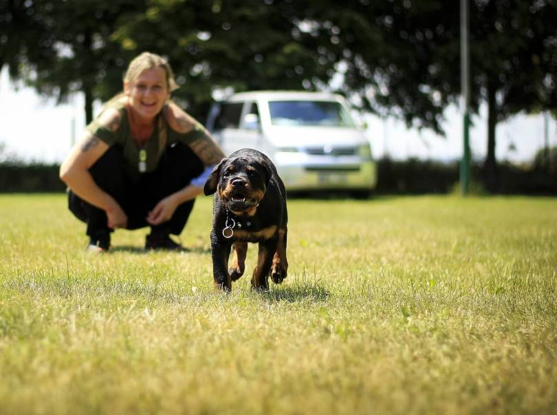 Things You Should Know Before Owning A Rottweiler