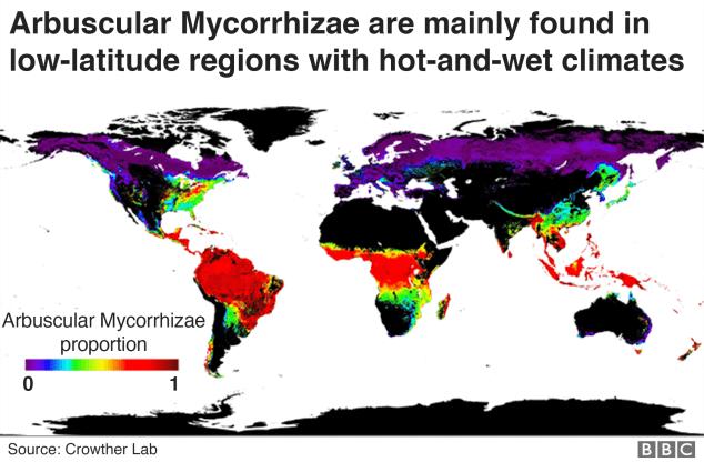 fungus map