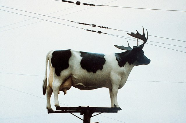 800px-Cow-on_pole,_with_antlers