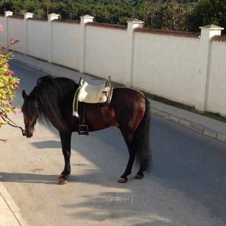 Patient horse