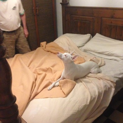 Helping make the bed