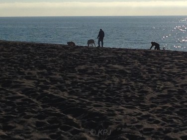 Dogs and beach. The only people on beaches in winter are dog walkers