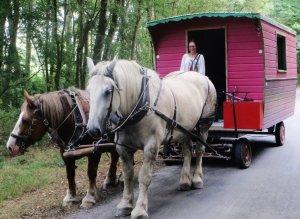 la roulotte attelée avec Zorba et Violette