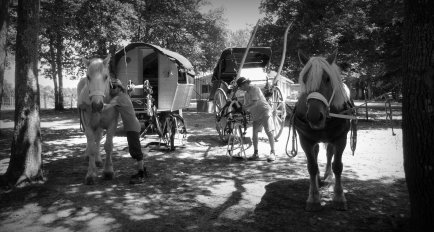 Arrivée à Maransin, les chevaux sont dégarnis.
