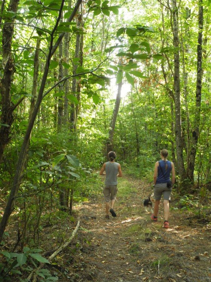 forêt et promeneurs