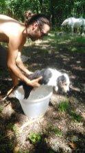 chien, eau