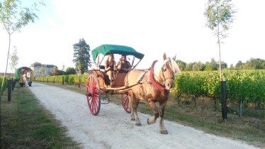 calèche roulotte chevaux