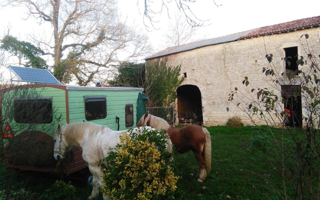 Des chevaux de compétition! au repos pour l'hiver…