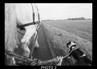 cheval, nasba, route
