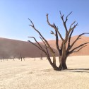 "Tree at Deadvlei with ""Big Daddy"" dune in the background"