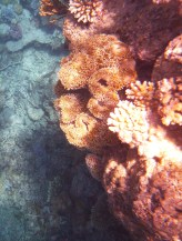 Coral, you can see a bit of the depths of them - it really was amazing