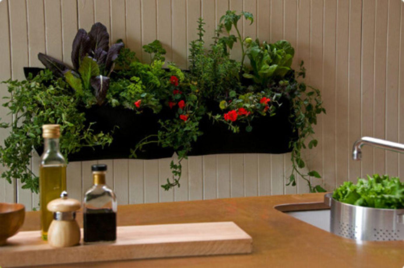 23 Amazing Indoor Wall Herb Garden Ideas