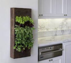 Amazing indoor wall herb garden ideas (3)
