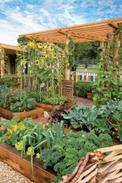 Affordable backyard vegetable garden designs ideas 05