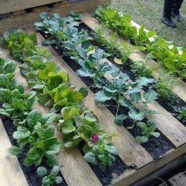 Affordable backyard vegetable garden designs ideas 06