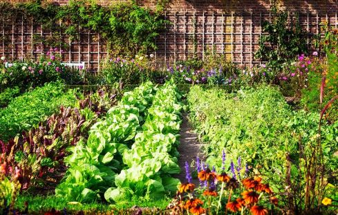 Affordable backyard vegetable garden designs ideas 07