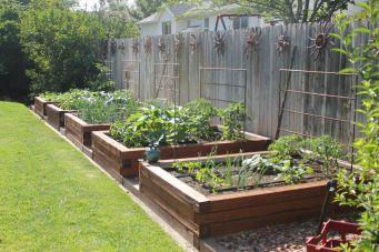 Affordable backyard vegetable garden designs ideas 19