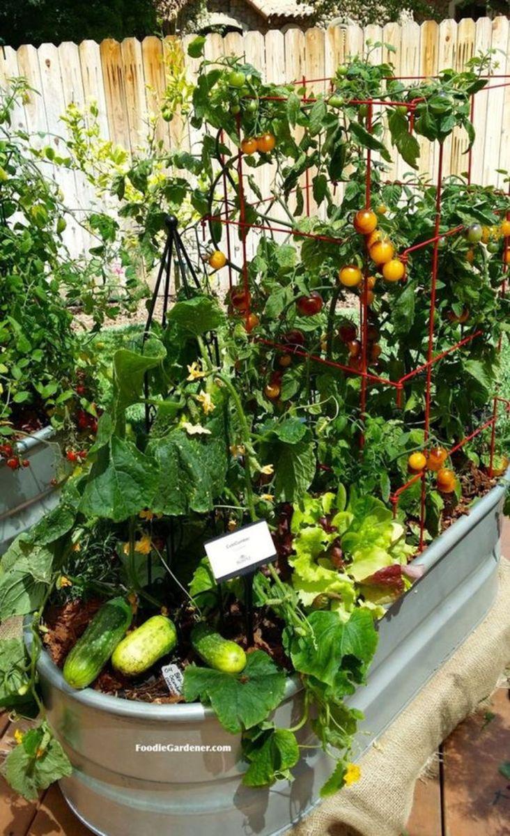 Affordable backyard vegetable garden designs ideas 25