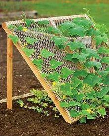 Affordable backyard vegetable garden designs ideas 60