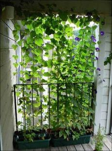 Cute and simple tiny patio garden ideas 57