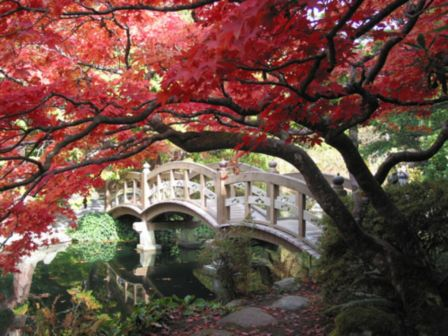 Stunning japanese garden ideas plants you will love 06