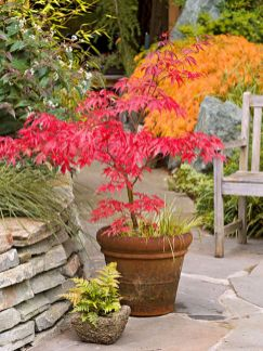 Stunning japanese garden ideas plants you will love 14