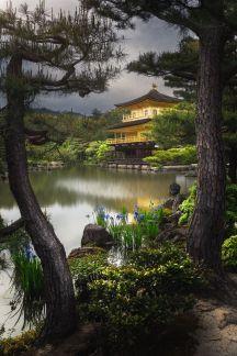 Stunning japanese garden ideas plants you will love 15
