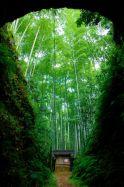 Stunning japanese garden ideas plants you will love 16