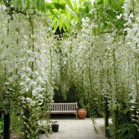 Stunning japanese garden ideas plants you will love 19