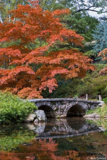 Stunning japanese garden ideas plants you will love 33