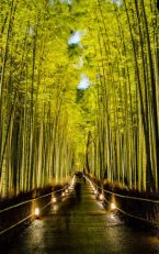 Stunning japanese garden ideas plants you will love 50