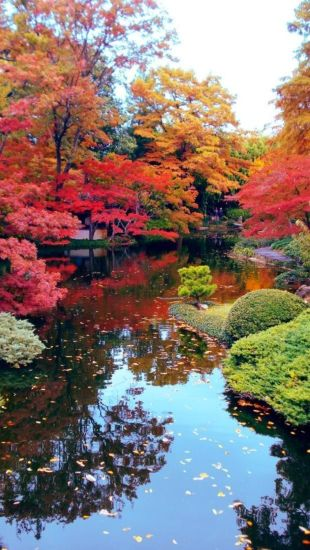 Stunning japanese garden ideas plants you will love 79