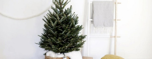 Small Christmas Tree Archives - Round Decor