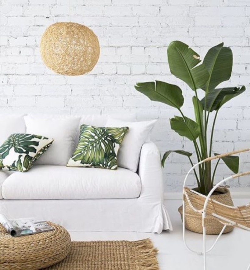 Stunning indoor plants ideas for your living room and bedroom 01