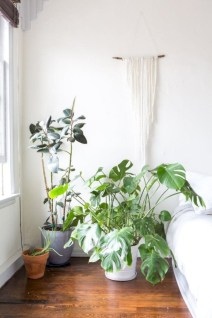 Stunning indoor plants ideas for your living room and bedroom 03