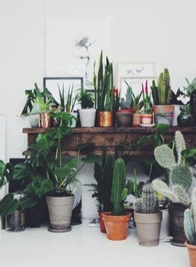 Stunning indoor plants ideas for your living room and bedroom 11