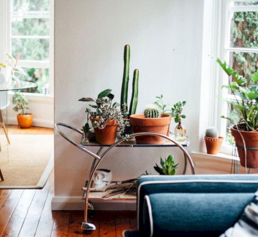 Stunning indoor plants ideas for your living room and bedroom 18