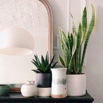 Stunning indoor plants ideas for your living room and bedroom 22
