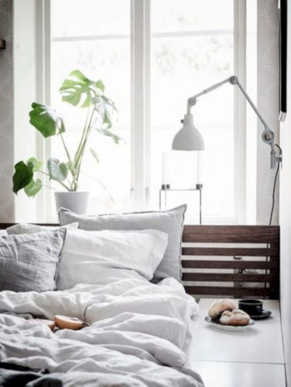 Stunning indoor plants ideas for your living room and bedroom 24