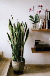 Stunning indoor plants ideas for your living room and bedroom 40