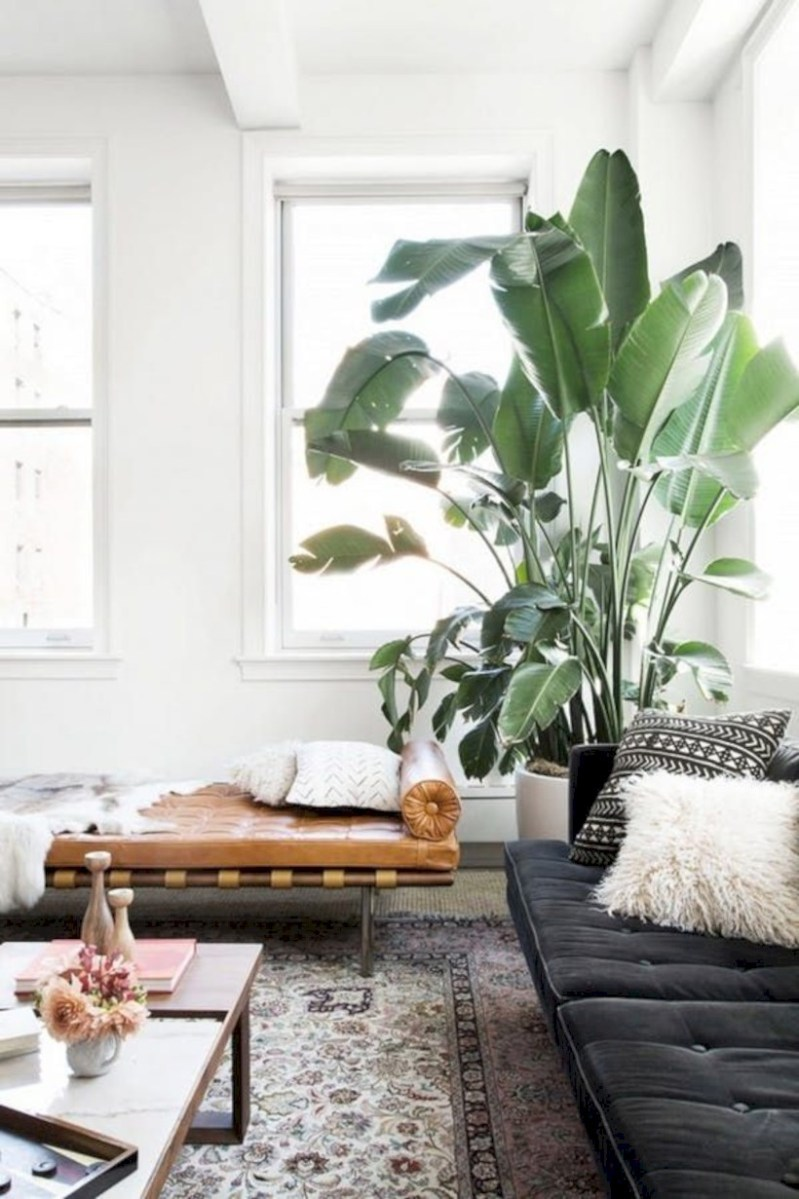 Stunning indoor plants ideas for your living room and bedroom 41