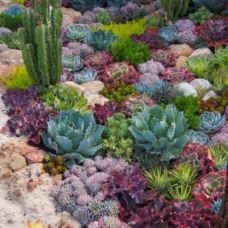 Beautiful rock garden landscaping ideas 27