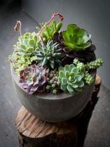 Creative diy indoor succulent garden ideas (10)