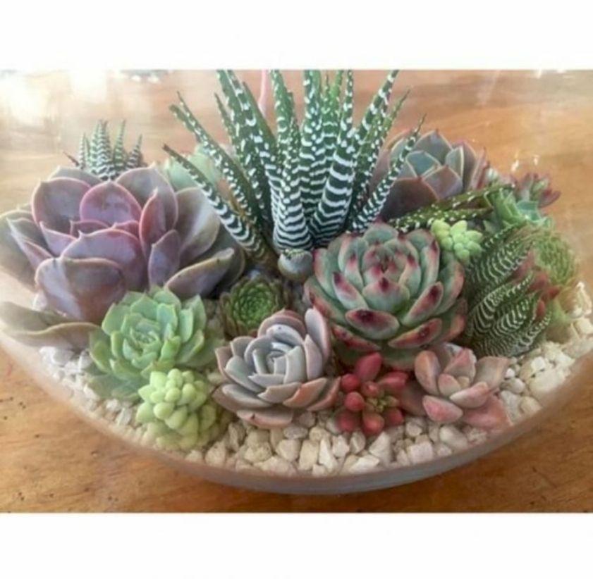 Creative diy indoor succulent garden ideas (12)