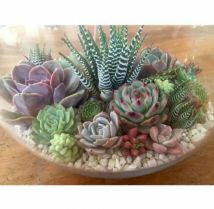 Creative diy indoor succulent garden ideas (12)