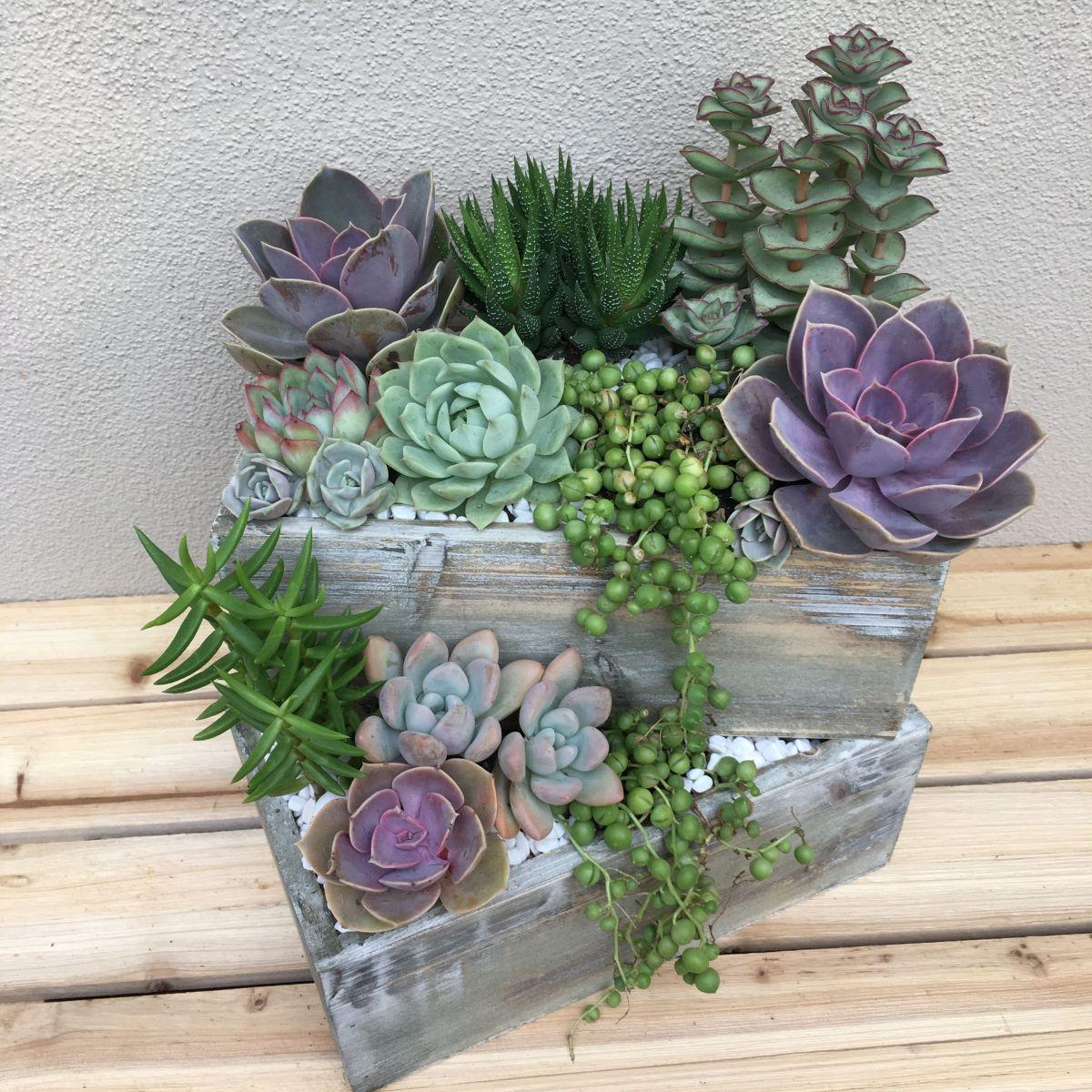 Creative diy indoor succulent garden ideas (16)