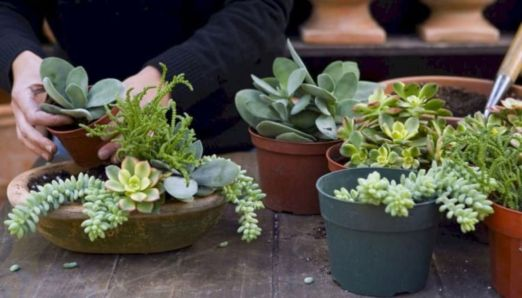 Creative diy indoor succulent garden ideas (2)
