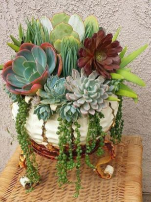 Creative diy indoor succulent garden ideas (22)
